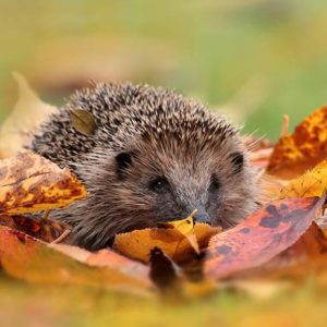 R Autumn