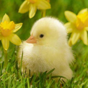 R Spring